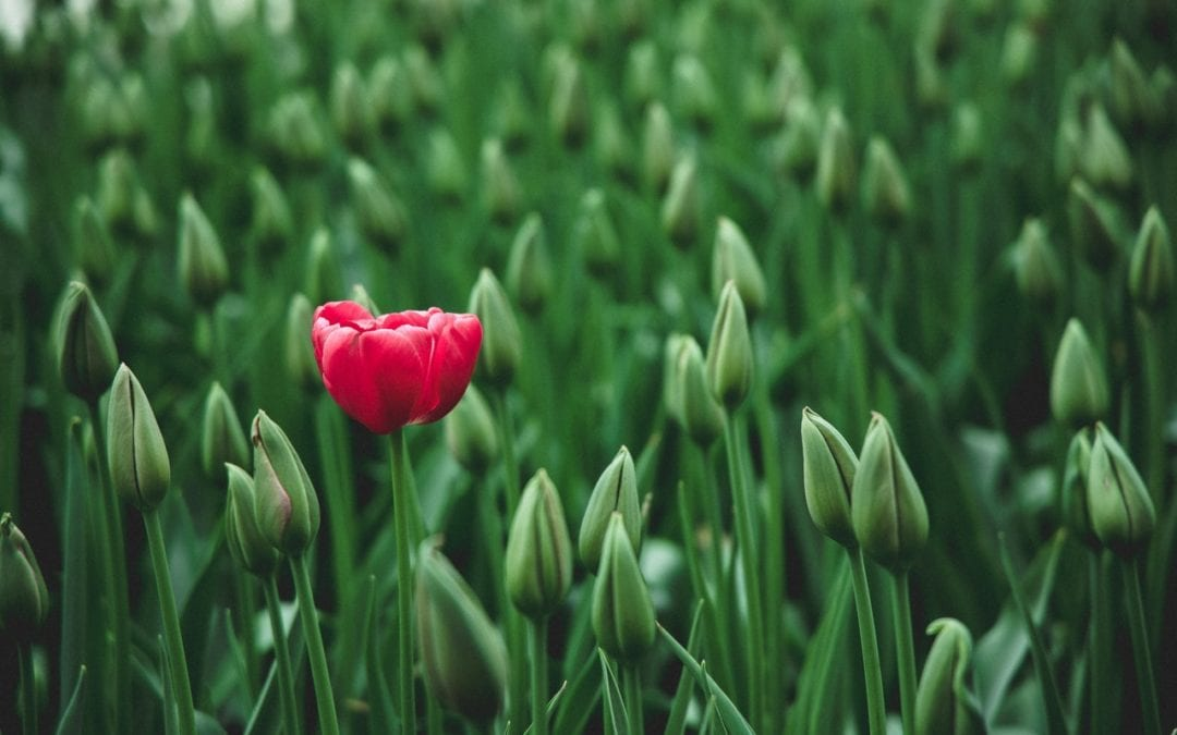 Make Your Website Stand Out in 2020